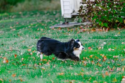 028Pelkey-Dogs-20171022_5077