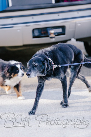 018Pelkey-Dogs-20171022_5055