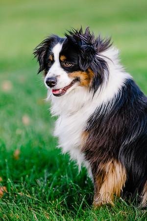 015Pelkey-Dogs-20171022_5118
