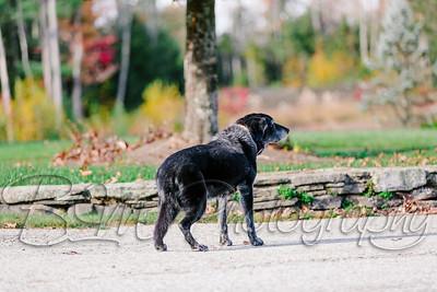 035Pelkey-Dogs-20171022_5111