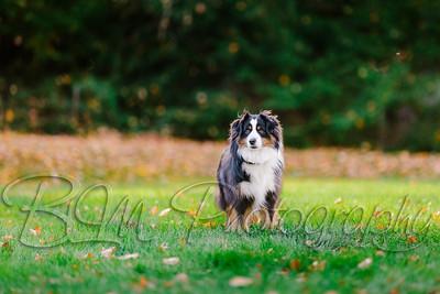 010Pelkey-Dogs-20171022_5100