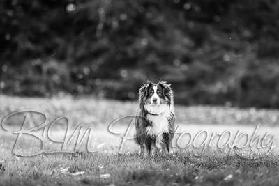 012Pelkey-Dogs-20171022_5102