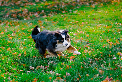 029Pelkey-Dogs-20171022_5078