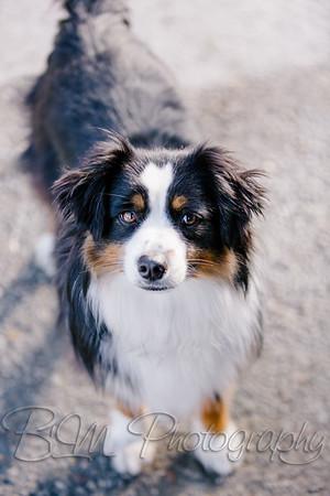 016Pelkey-Dogs-20171022_5125