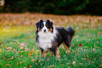 005Pelkey-Dogs-20171022_5086