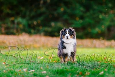 011Pelkey-Dogs-20171022_5101