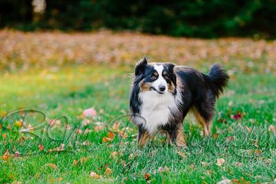 031Pelkey-Dogs-20171022_5081