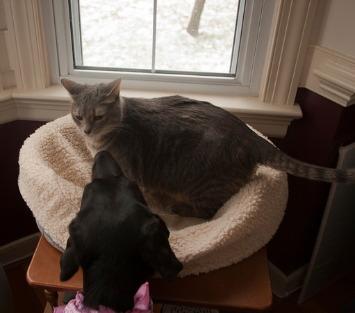 Pepper and Sasha Playing