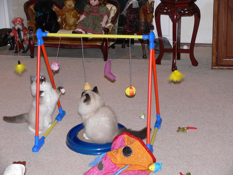 Penny and Percy playing with their new toy