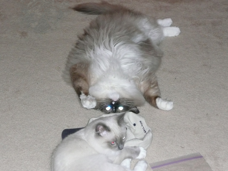 Percy and Bed playing