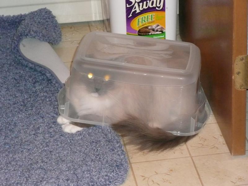 Beddy in box