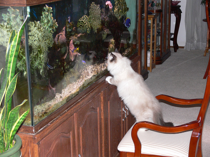 Percy has discovered the fish!