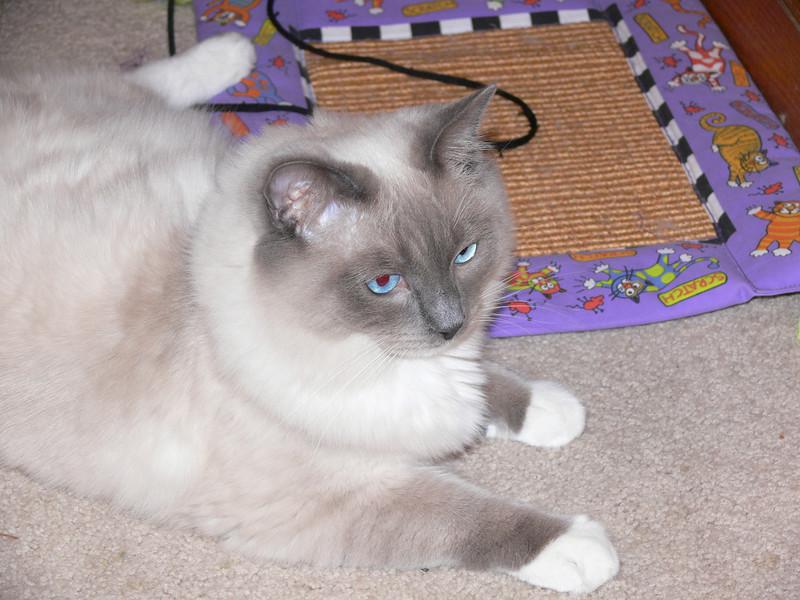 Bedivere 8 months old