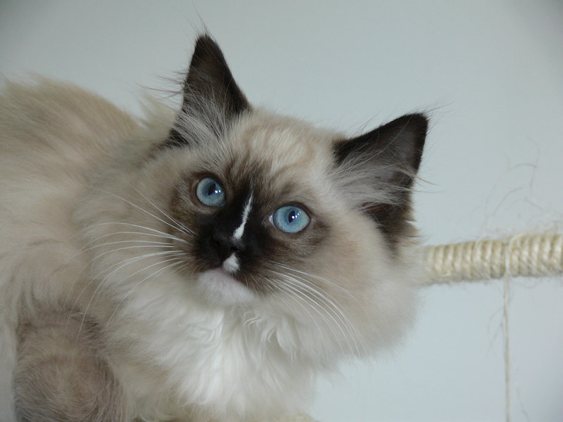 Percy at 13 weeks