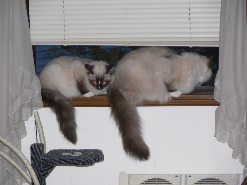 Penny and Percy on the window sill upstairs. You can see the size difference.
