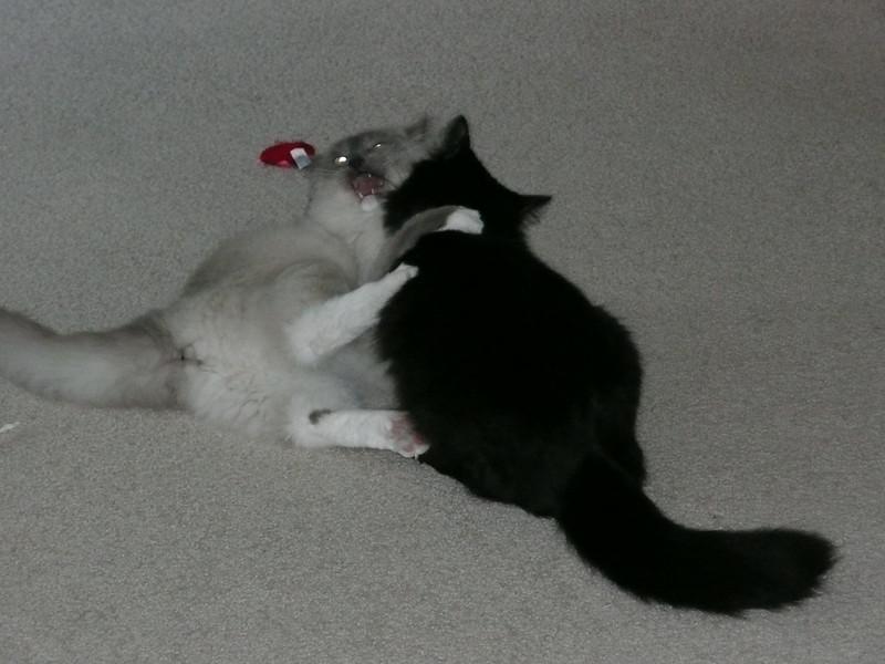 Bedivere wrestling his cousin d'Artagnan