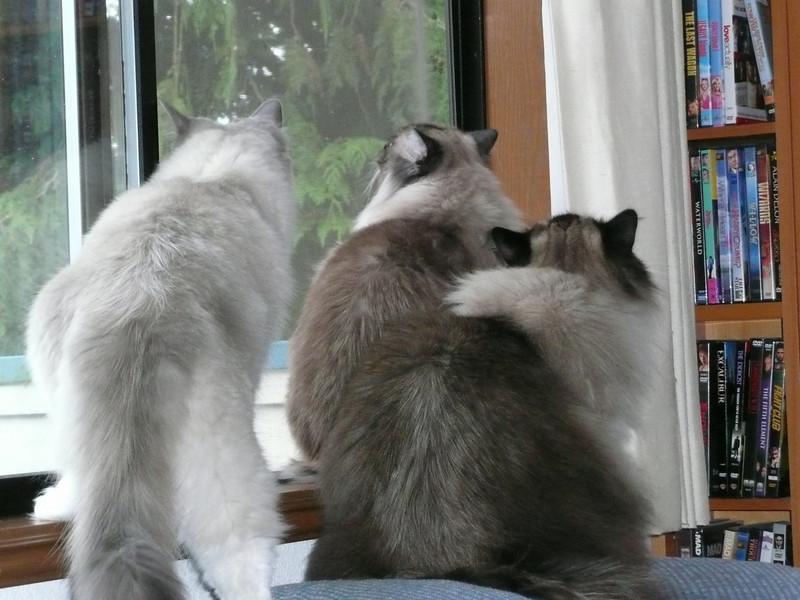 Kitties at an open window