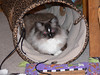 Penny in her tunnel