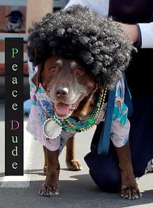 Peace Dude!