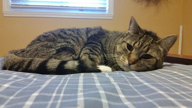 my cat tasha