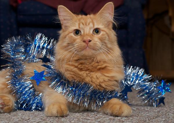 Christmas Hannah