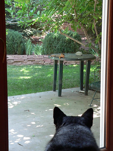 Puppy alert, July 2005