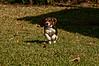 Snoopy<br /> November 29, 2009