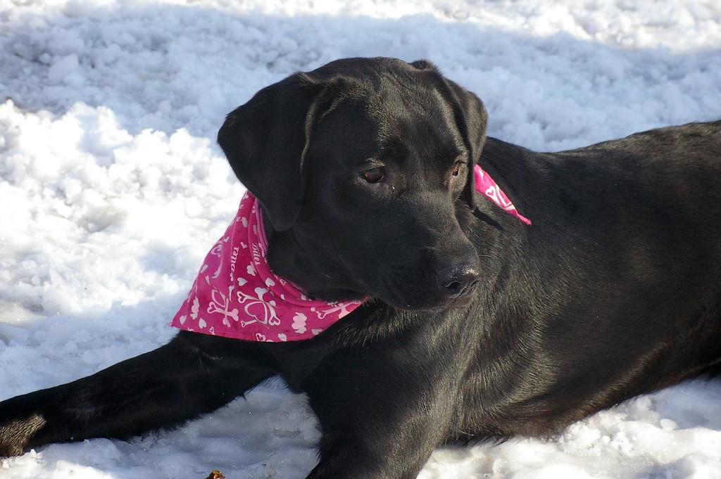 Maribell in the snow.