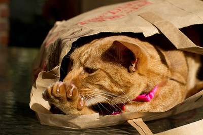 20121021-IMG_0627 A manicure?  Occicat playing in a bag, enjoying a little sun.