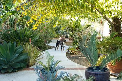 20130625-IMG_5590 My Appenzeller Sennenhunde in her garden.
