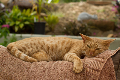 Napping on the top of patio furniture provides the best vantage point for keeping an eye out for that darn puppy.