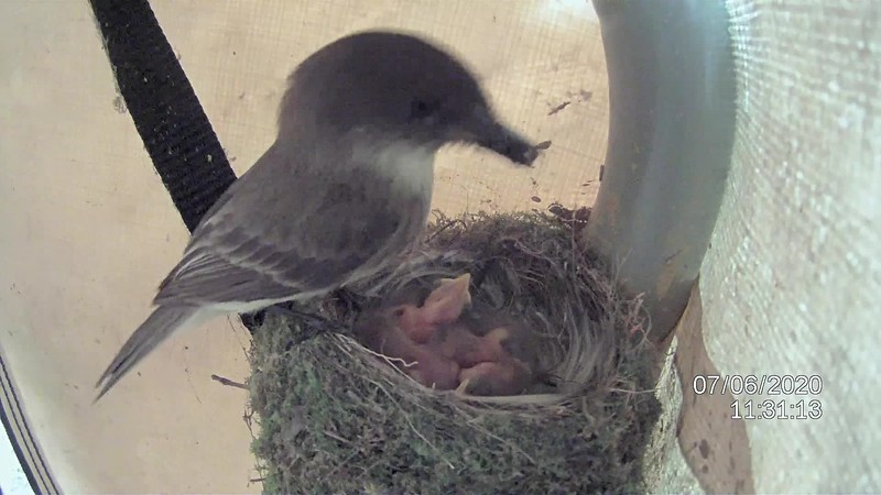 Baby Birds Day Three