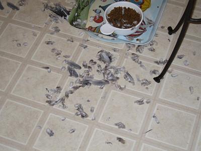 Tino! What a mess!
