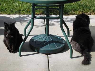 Valentino and Mougie just chillin' in the backyard.