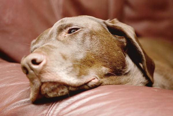 Pets-General 2012