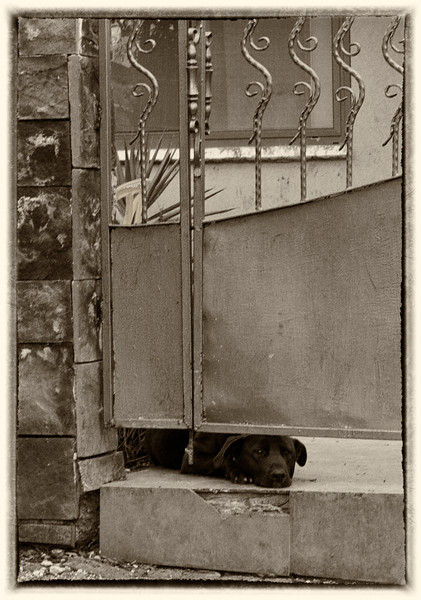 Forlorn - dog under the gate