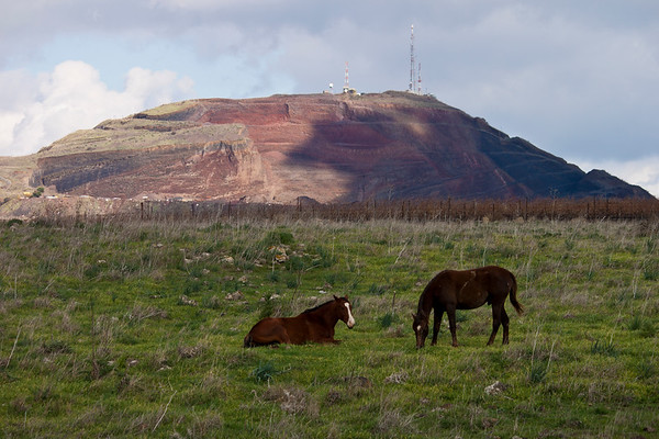 Horses in a field in front of a mountain in the Golan