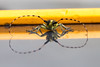 Bug and reflection with yellow background - 2