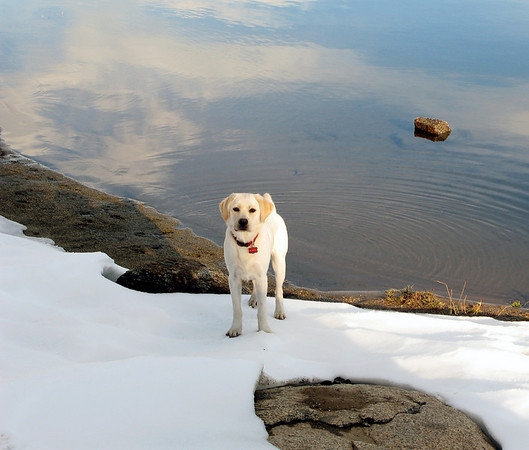 Sophie at Shaver Lake in the snow.