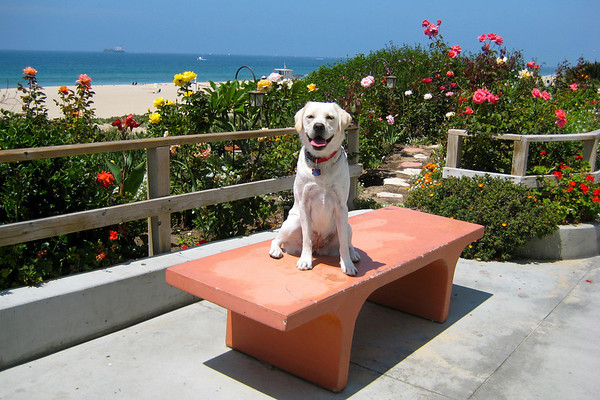 Sophie in Manhattan Beach, CA.