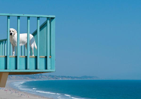 """Sophie's Beach Day"". Aptos Beach, CA."