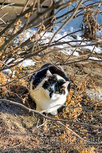 Wharf Cat near Casco Bay Lines.