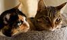 _MG_4718 kitties
