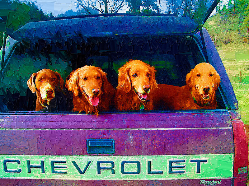 Have Dogs Will Travel