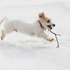Flying Dog