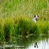 Ranch Dog Reflection