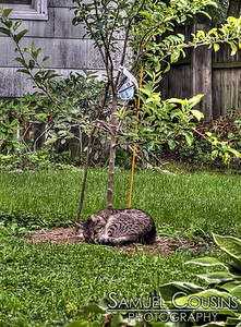 Cat sleeping on the lawn