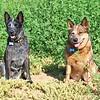 Kona & Loki at Hodges
