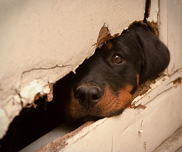I was at work, and this curious little Rotweiler was wanting to play so bad. I could not resist taking this shot