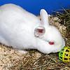 Barney - (Fraser & Bethany's Rabbit)